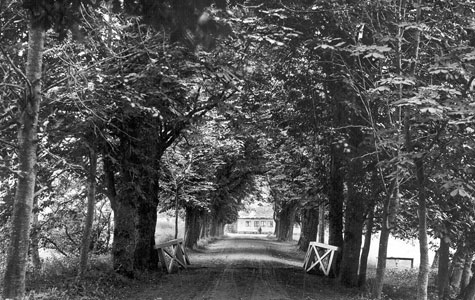For enden af alleen ses bagerhuset, som stadig ligger ved indgangen til Åsen fra Ølbyvej.
