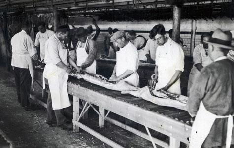 Ansatte ved Køge Andels-Svineslagteri parterer svin på samlebånd i 1930'erne.