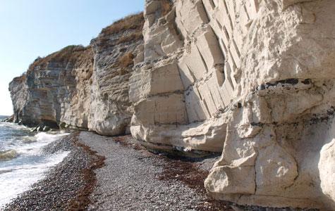 Lagene i Stevns Klint består af kalk og flint, der blev dannet for ca 65 millioner år siden.