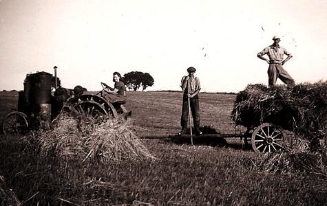 Høstet med traktor, omkring år 1950.
