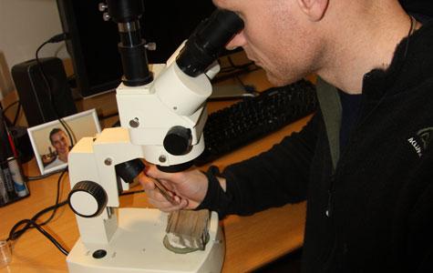 En forsker undersøger et stykke Fiskeler i et mikroskop.